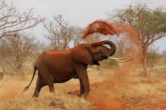 Beautifull Elephant Pics | Elephant images