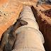 Animais soltos e Febre Maculosa preocupam vereadores em Pirapora