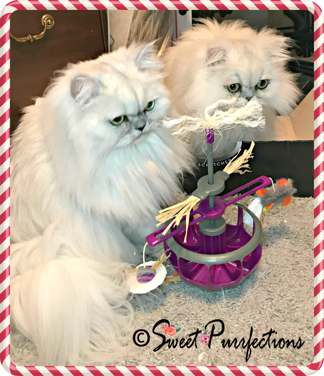 Sweet purrfections 12 days of catmas petmate for Jackson galaxy band