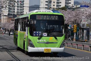 釜山鎮海櫻花