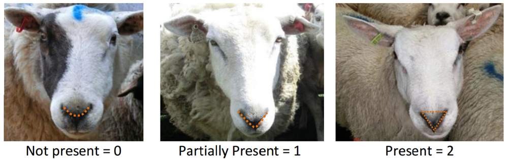 Sheep Pain Facial Expression Scale
