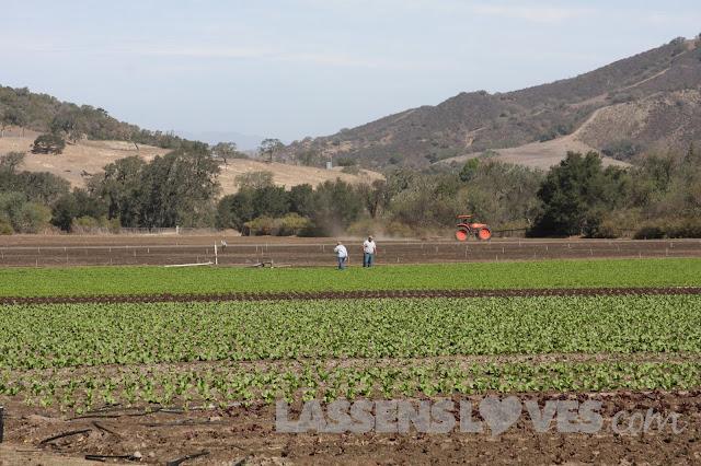 organic+farming, organic+food, healthy+soil