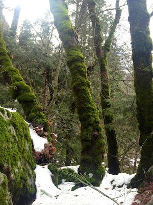 ahwahnee yosemite trees