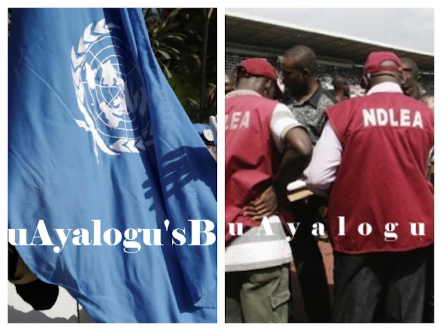 UN, NDLEA Support Usage Of Indian Hemp To Tackle Medical Related Problems In Nigeria