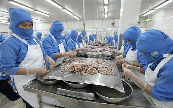 Chuyển giao máy giặt nhuộm TOLKAR cho công ty chế biến thủy sản tại Cần Thơ