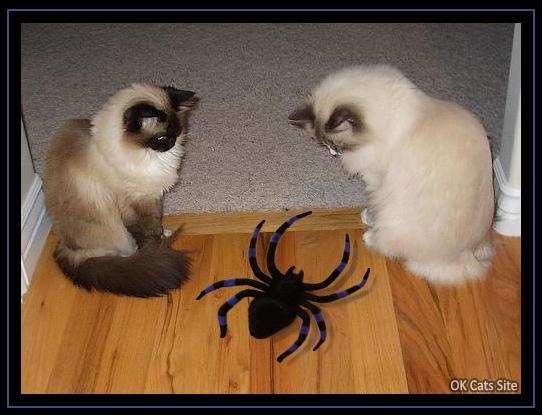 Photoshopped Cat picture • OMG! 2 innocent kitties with a huge black spider! [ok-cats-site.com]