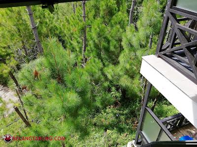 Lereng Bukit Pine