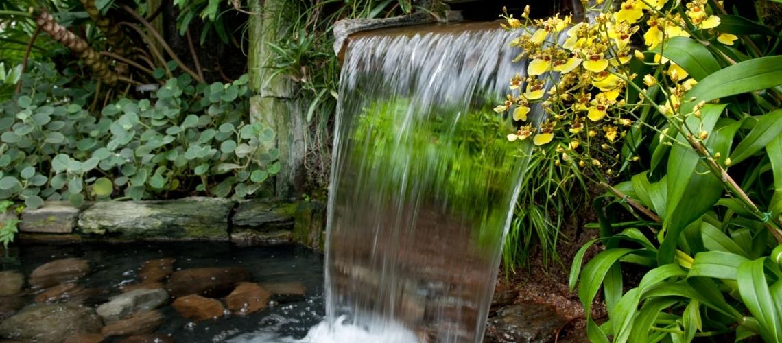 cascada de agua y Peperomia incana
