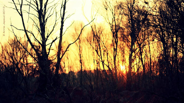 naked trees at sunrise, sun flare between the branches