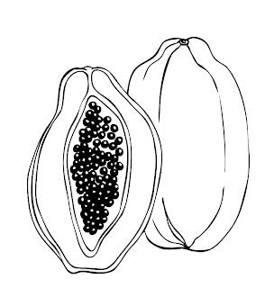 papaya fruit clipart black and white - photo #44