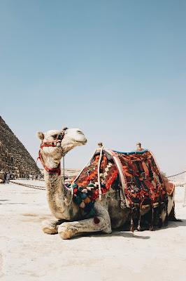 Reisetipps für Behinderte-Gehörlose und Stumme.-Tourismus in Ägypten 2020.