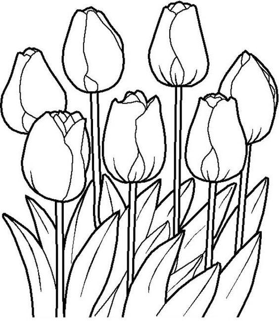 Hình tô màu hoa TuLip đẹp
