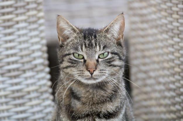 Should I pee or neuter my cat?