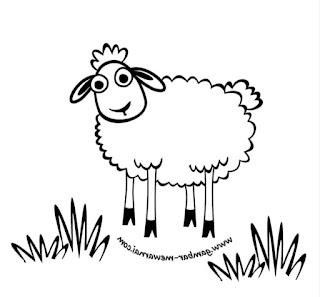 sketsa domba