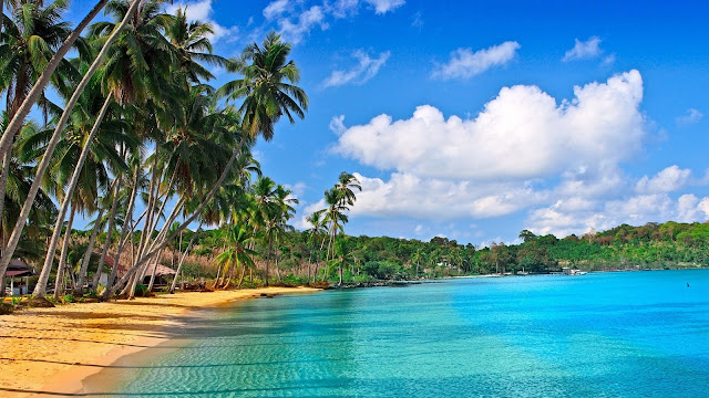 Mooie foto van palmbomen op het strand en een blauwe oceaan.