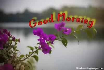 Love Good Morning flowers