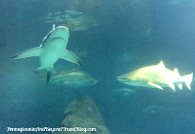 The Adventure Aquarium in Camden New Jersey