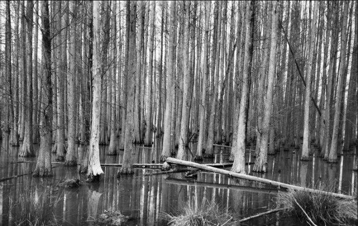John Rosenthal, Photographer - Forest