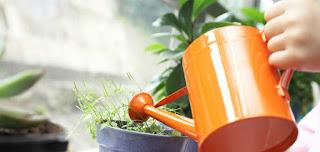 Como cuidar das plantas no inverno