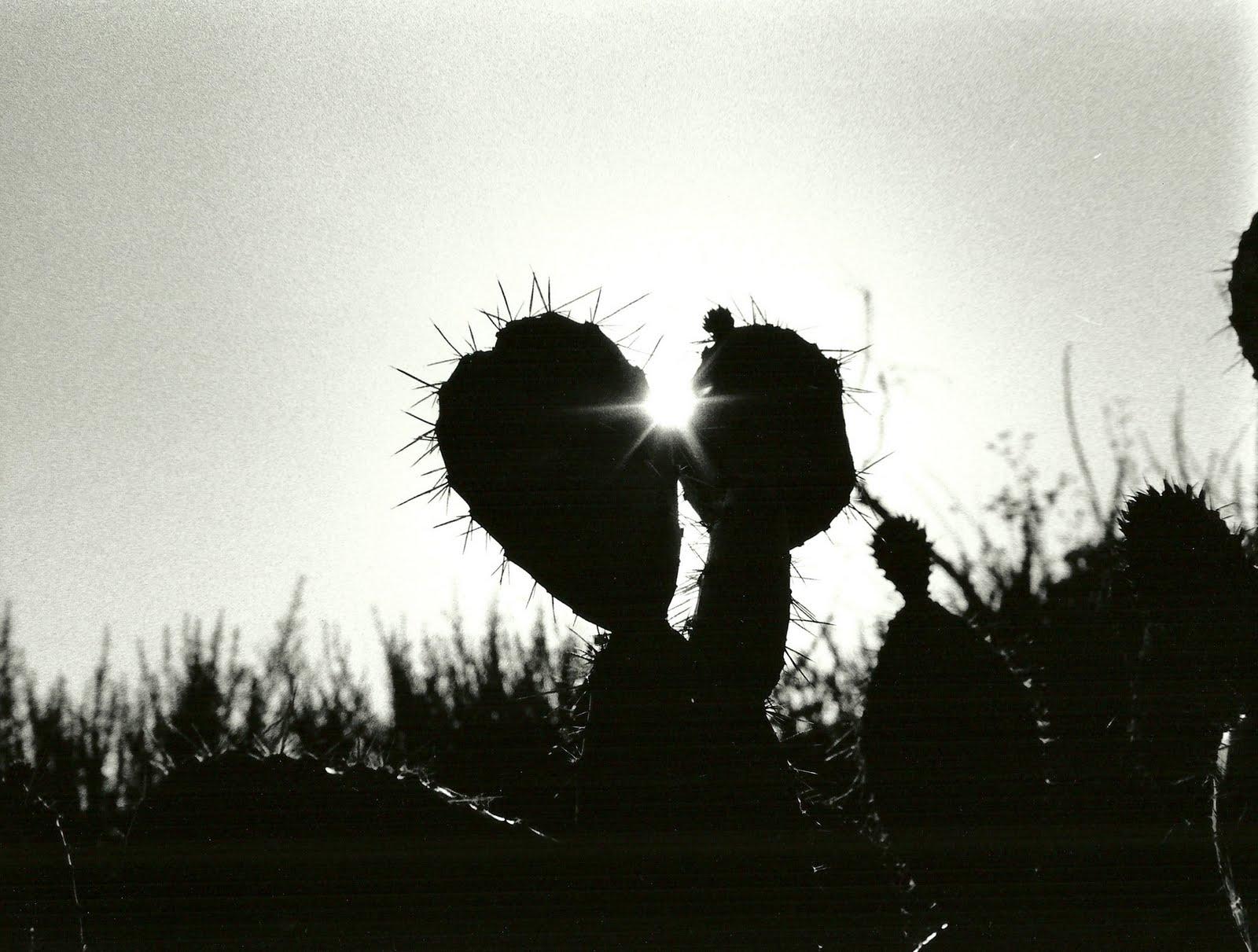 Art Kaitlin: Silhouette Series