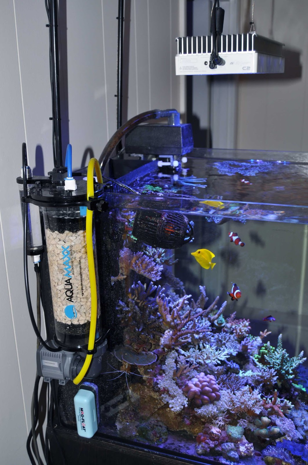 January 2013 Featured Tank Shaun S 34 Gallon Sps And Clam