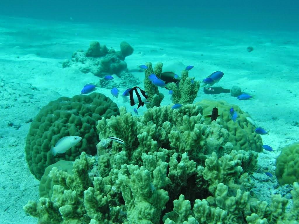 Calalin reef