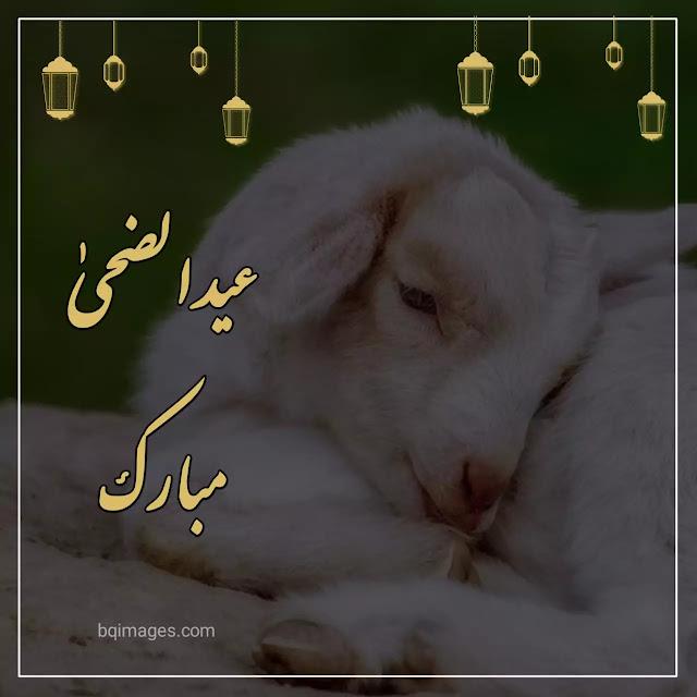 bakrid Eid ul Adha wishes