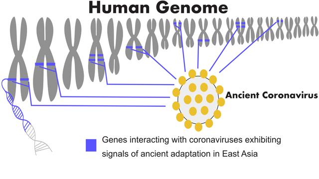 Studi Genom: Virus Corona Pernah Ada di Asia Timur 20 Ribu Tahun Lalu