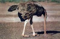 Avestruz con la cabeza en el suelo