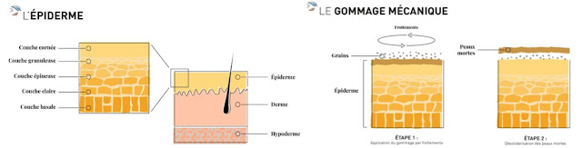 schéma explicatif de l'épiderme et de l'action du gommage mécanique