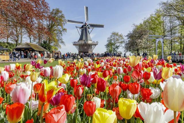 Holanda: 12 lugares para conhecer no país das tulipas, moinhos e tamancos