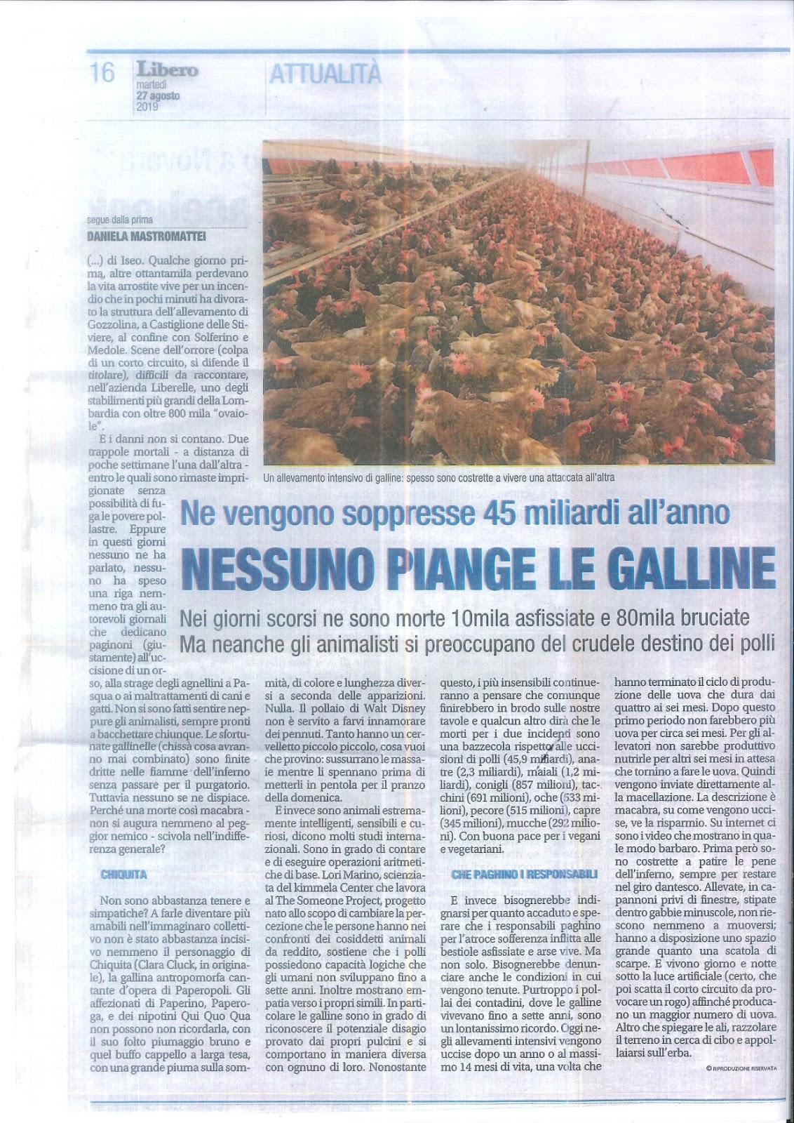 NESSUNO PIANGE LE GALLINE