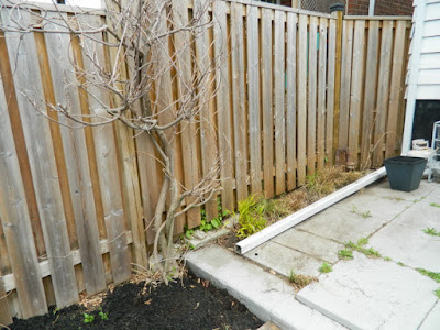 Toronto Birch Cliff spring garden cleanup after by Paul Jung Gardening Services