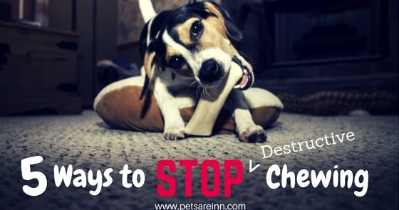 When To Stop Crating A Dog