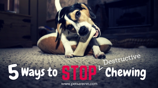 5 Ways to Control Chewing