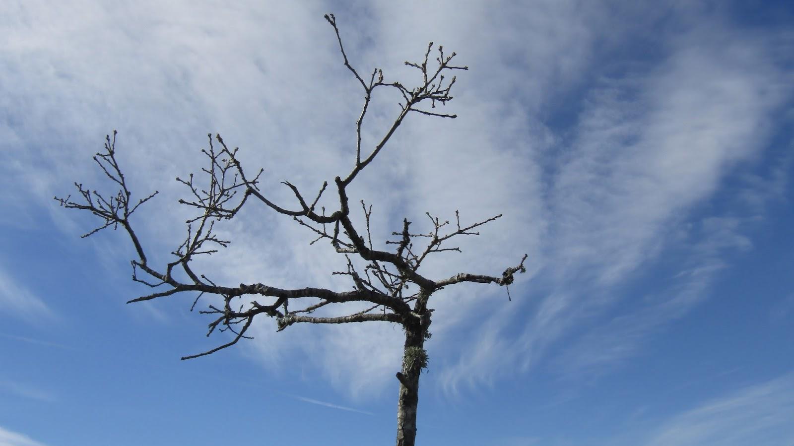 El Espejo Gótico: Placer: Charlotte Brontë; poema y