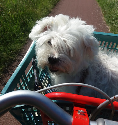 Hond op de fiets