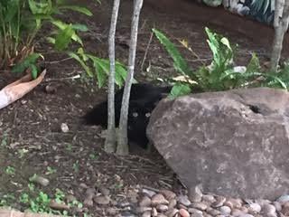 The Stray Cat Blog: Diary of Cats: New Black Cat, Dead Bird