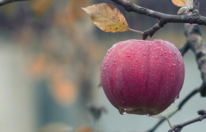 ¿La agricultura debería prohibir los pesticidas?