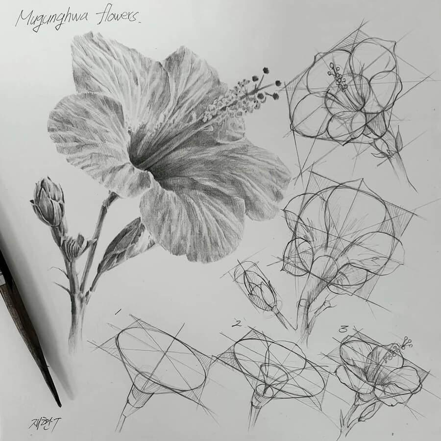 09-Hibiscus-flower-Anjjaemi-www-designstack-co