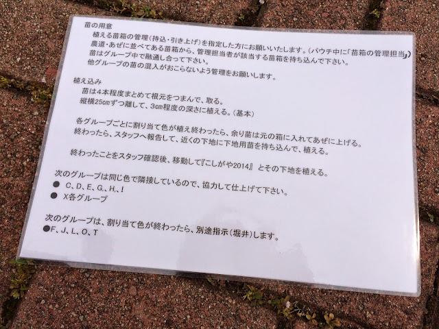こしがや田んぼアート2014南越谷阿波踊り(田植え)