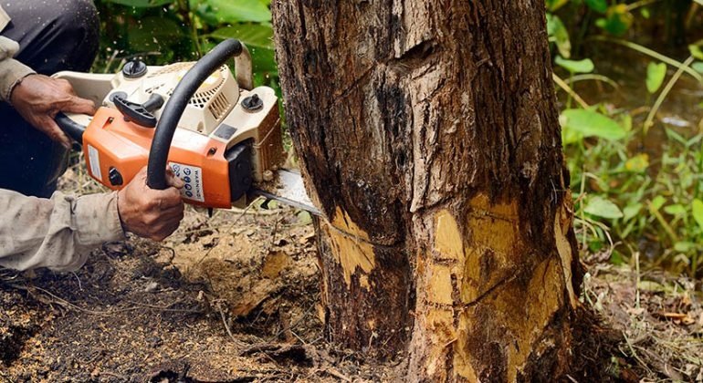 Factors Influencing The Costs of Tree Services
