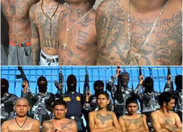 """""""Artistas Asesinos"""" y """"Los Mexicles"""", ¿se avecina una guerra en el Cártel de Sinaloa?"""
