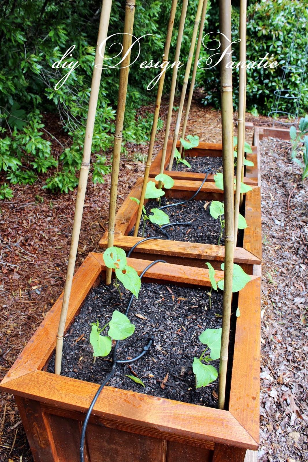 Raised Garden Box Irrigation