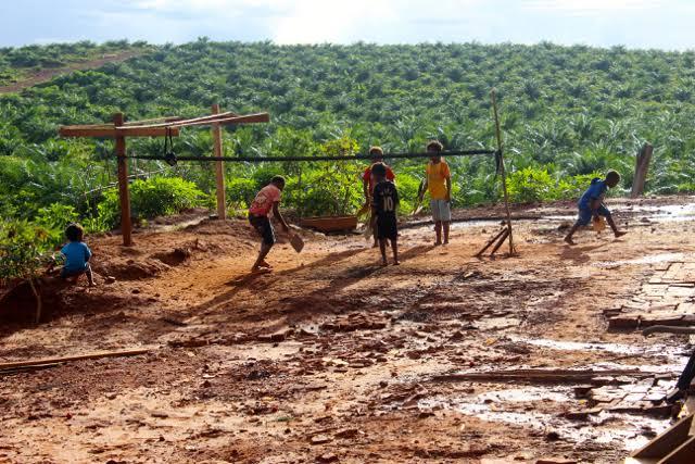 Hendak Digusur Korporat Sawit, Masyarakat Adat Papua Lancarkan Protes