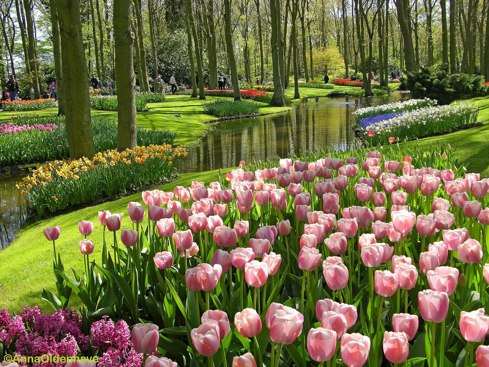 My Blog Gallery Assorted Images of Beautiful and Colorful Tulips