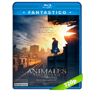 Animales fantásticos y dónde encontrarlos (2016) BRRip 720p Audio Dual Latino-Ingles
