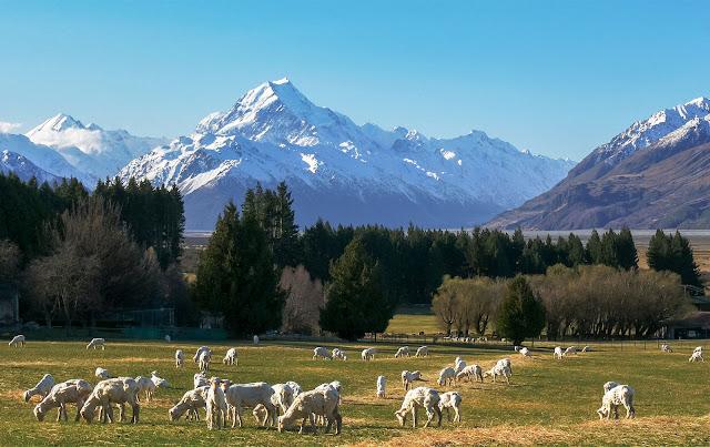 Kini Anda Boleh Dapatkan Visa Kerja Sambil Travel Ke New Zealand
