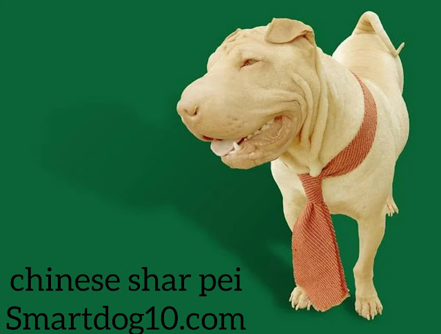 shar pei dog price