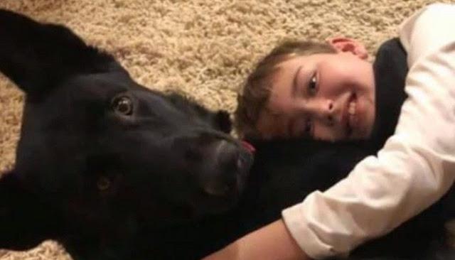 Незнакомец ехал 52 часа через всю страну, чтобы привезти больному мальчику его собаку